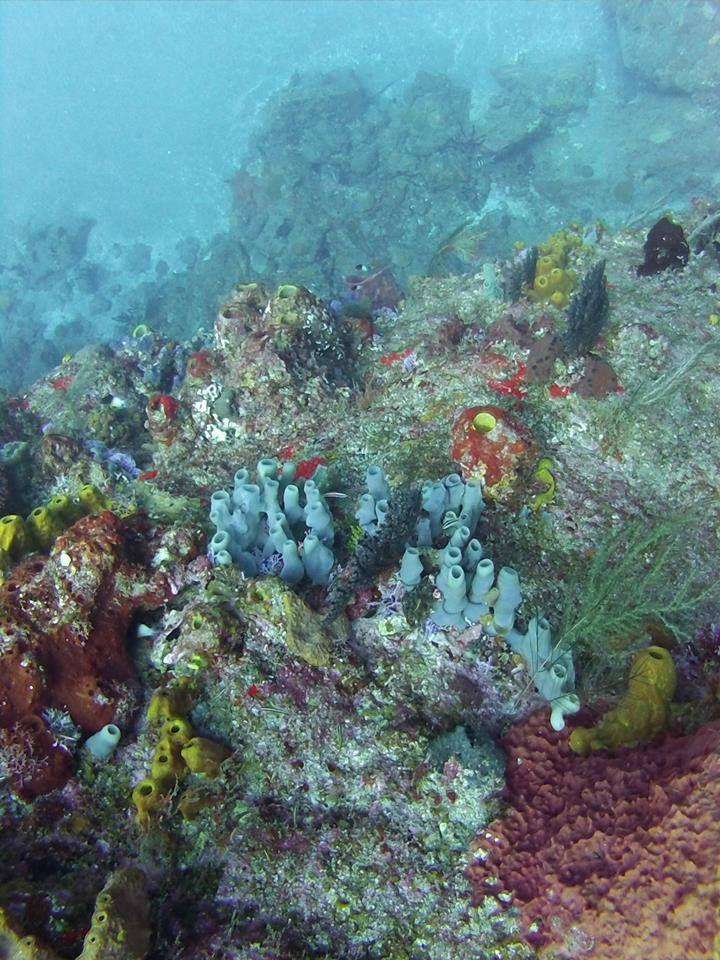 Diving & Snorkling On Pinterest