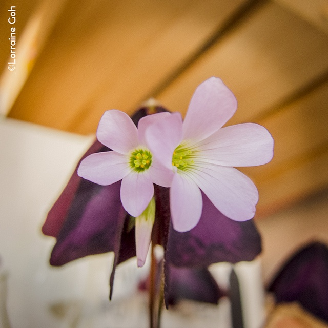 Sign of spring by Lorraine Goh, via Flickr