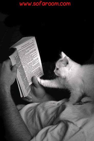 İyi dostlar, iyi kitaplar, bir de huzurlu bir vicdan; işte ideal hayat... ~ Mark Twain ~ İyi Akşamlar www.sofaroom.com #sofaroom #yatak #yuvarlakyatak #kalite #konfor #şık #tasarım #moda #kaliteninadresi #like4like #20likes #renk #oda #yatakodası #rahat #dizayn #dekorasyon #alez #beautiful #nature #instagood #ev #home #iyiakşamlar #yorgan #nevresimtakımı #yatakörtüsü