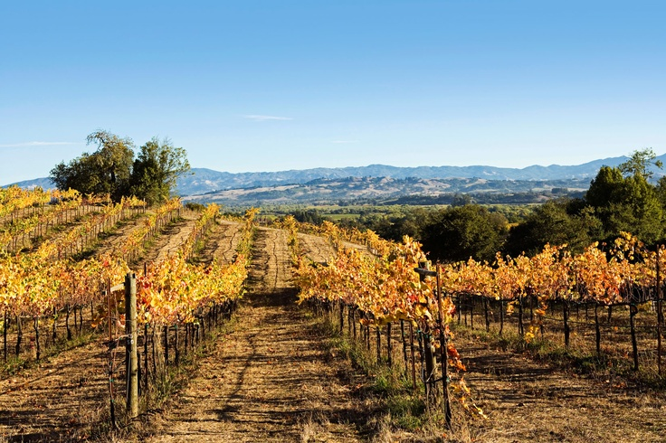 Resortime Com S Photo Of The Day Napa Valley California Travel