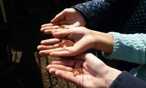 Bio Orti nelle Scuole: nascono i piccoli agricoltori bio