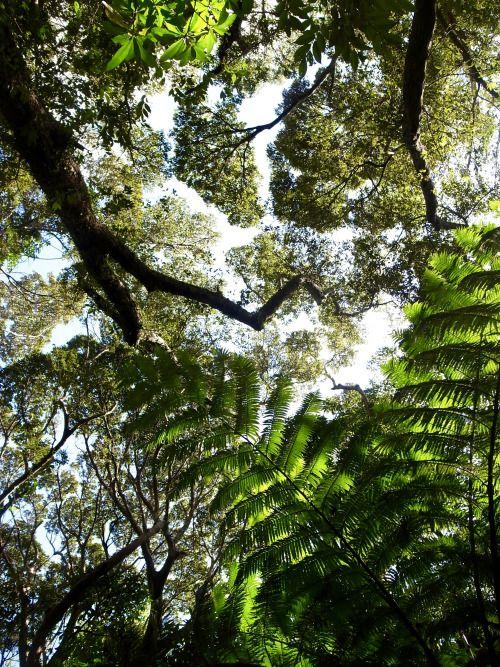 Deep forest in my citrus farm🌲feel refreshed😸空気が一瞬で変わる水源のほとり。何かが違う。。。 タンカン園の超シークレットスポットです。