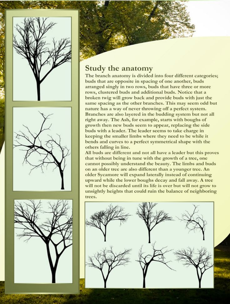 29 best Drawing trees images on Pinterest | Drawing trees, Draw and ...
