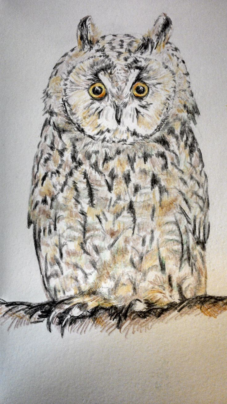 Owl in water colour pencils.