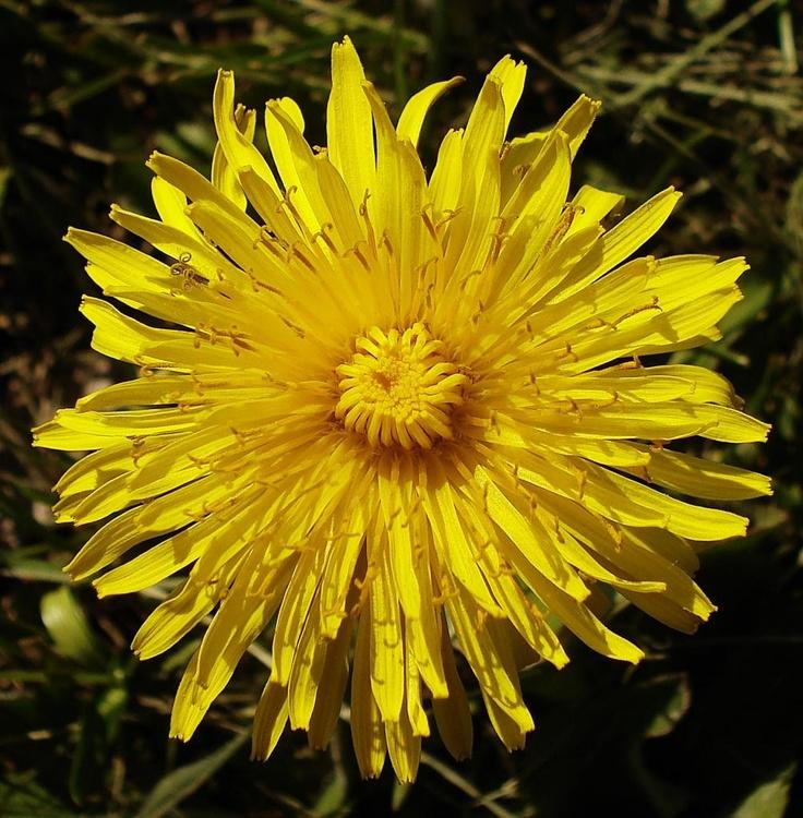 Yellow Flower by Douglas_Dunigans | Photobucket