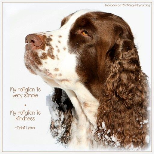 words we all should live by english springer spaniel