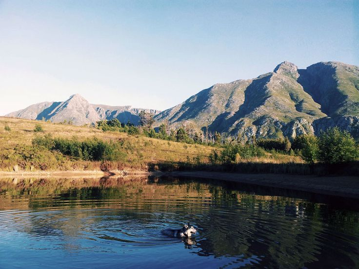 Spectacular scenery and soul food for humans and dogs within easy reach of Schoone Oordt Country Hotel Swellendam #Schooneoordt #Swellendam #marloth