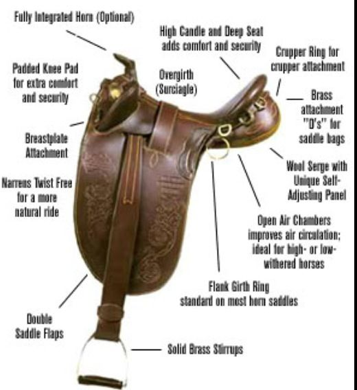 the different parts of a horse saddle Tack is a general term used to describe all horse riding equipment it includes  the saddle, stirrups, bridles, and other pieces that are put onto.