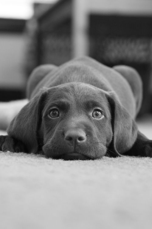 Sweetest face! #animals