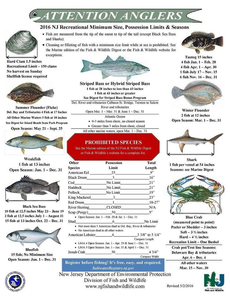 Nj saltwater fishing information nj fishing forums nj for Fishing tide charts