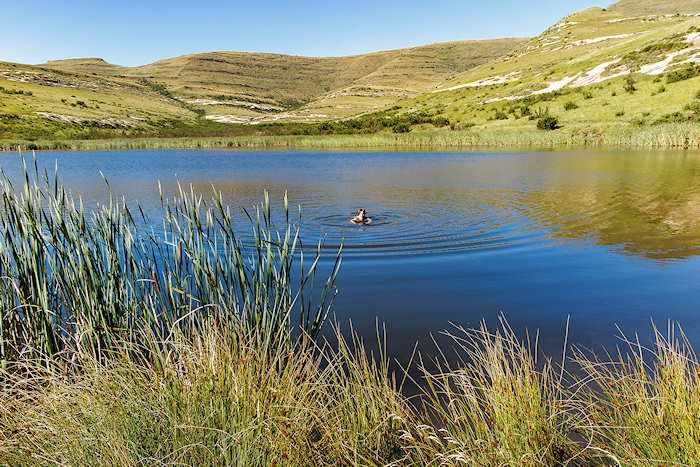 Swimming in Kloof Dam, Clarens, South Africa