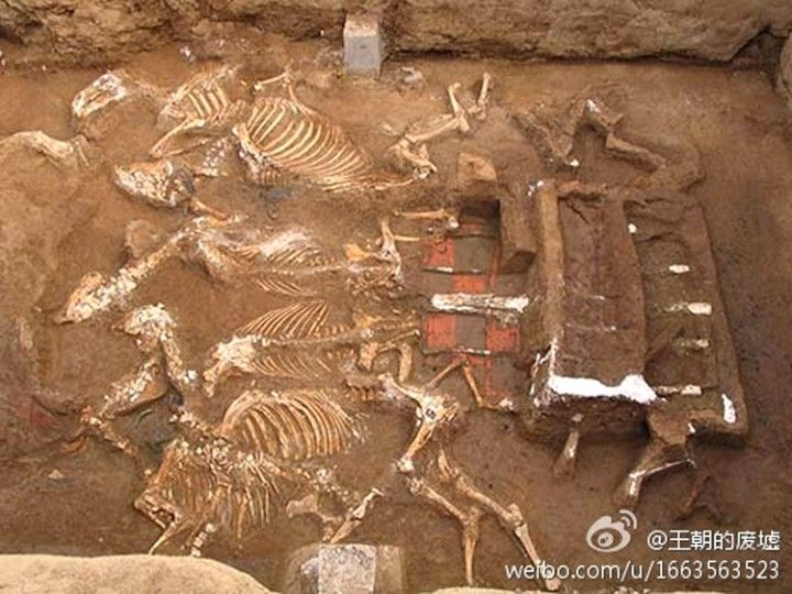 The skeletons of six horses have been found with a carriage, a symbol of royalty in medieval China--potentially the grandmother of the First Emperor