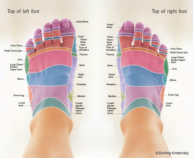 Reflexology Foot Maps to Maximise Your Massage | Reflexology foot ...