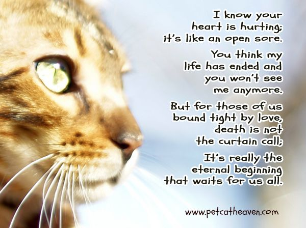 Cat Loss Quotes Extraordinary Loss Of A Beloved Cat Poem Poemviewco