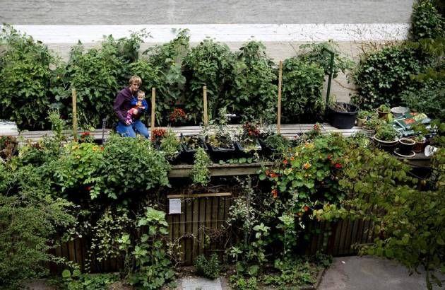 To nye bøger hjælper byhaver og grønne fællesskaber i gang Hvis du gerne vil dyrke noget fælles og grønt i nabolaget, er der inspiration at hente. Foto: Finn Frandsen (arkiv)