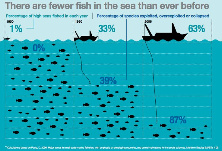 Rich countries pay zombie fishing boats $5 billion a year to plunder the seas