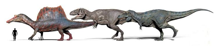 Spinosaurus / *Giganotosaurus / *Tyrannosaurus by Vitamin Imagination