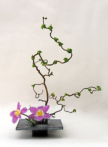 corylus, tulip and rosemary moribana ikebana