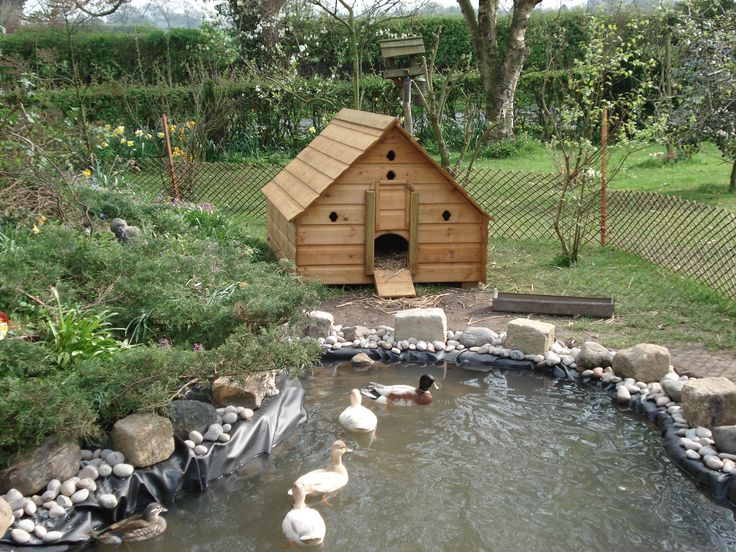 25 best ideas about duck pond on pinterest duck house for Build your own duck house