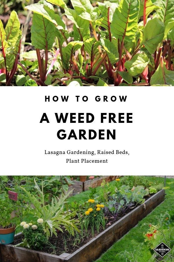 Learn how to use these gardening methods to grow a weed free garden. Learn tips …