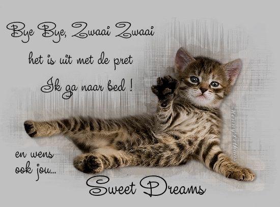 A little kitty is waving bye bye. It is off to sleep.
