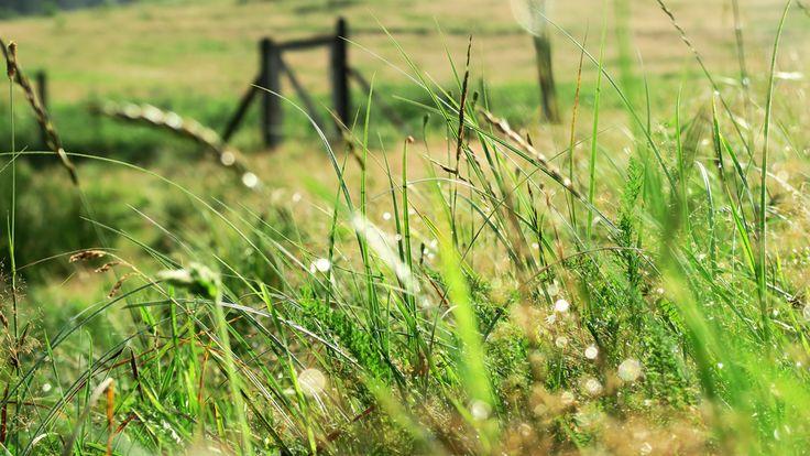 Łąka za domem - Siedlisko na wygonie na Mazurach