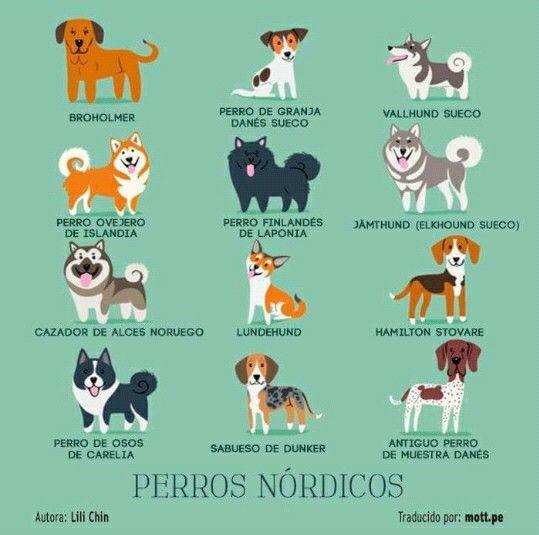 N rdicos mascotas pinterest mascotas frases de - Tipos de nordicos ...