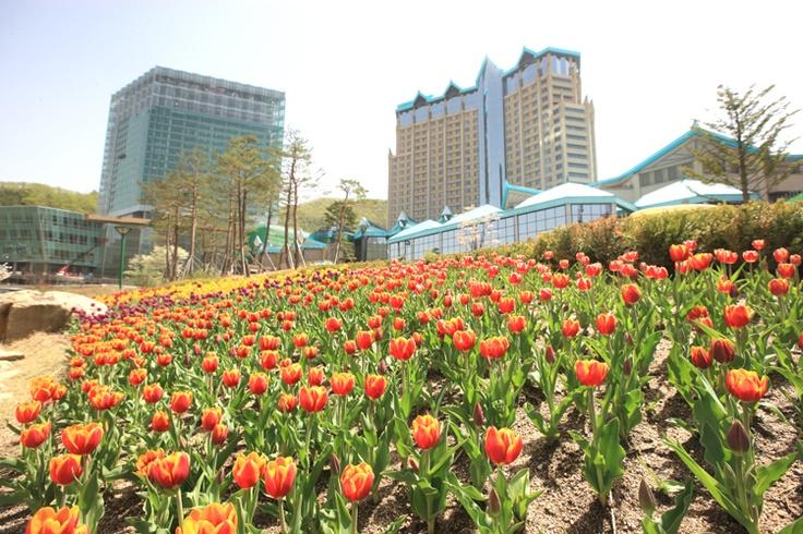 The Convention Hotel of High 1 Ski Resort in Jungsun, South Korea on April 19th, 2013. Homepage.http://www.high1.com/Hhome/main.high1 Blog.http://blog.naver.com/high1cs FaceBook.http://www.facebook.com/high1forcs Twitter.https://twitter.com/high1story