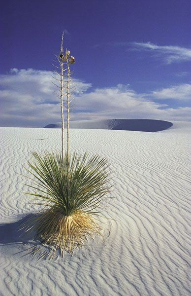 White Sands in New Mexico: National Monuments, Monuments Travel, Sources Travel, Places I D, Beautiful Usa, Sands National, White Sands, Travel Guide, New Mexico