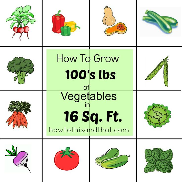 #EASY way to grow pounds of #vegetables in a small space!   #Garden must have