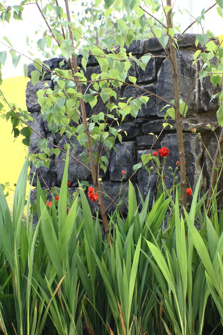 Solus Garden by Gardens Now & Creation Station  www.bloominthepark.com