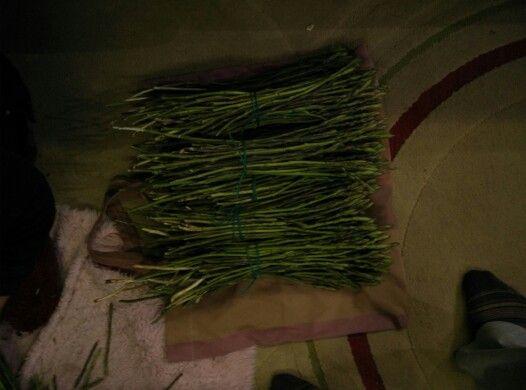 #asparagus