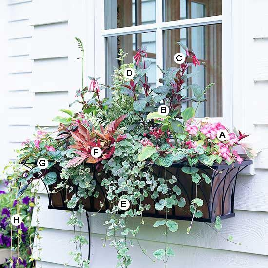 These plants were made for the shade! Add color to shady areas with our easy plant-by-number window box ideas.