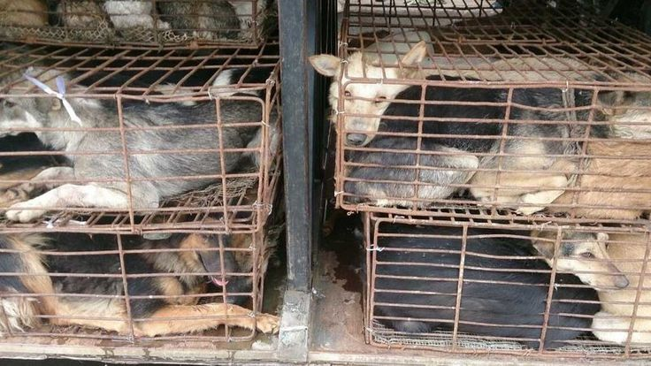 Send email to Gov. Jerry Brown, share and sign Petition · Stop the Brutal Dog and Cat Meat Trade in Canton, China. · Change.org