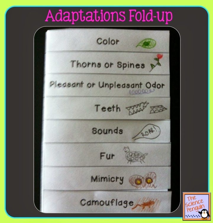 The Science Penguin: Time to Teach: Animal Adaptations