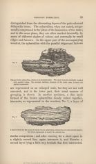 Darwin Online: Illustrations in Geology of The Voyage of The Beagle