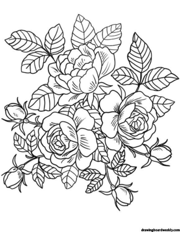 Coloring Page Roses Full Detailed Coloring Pages Rose Coloring Pages Printable Flower Coloring Pages