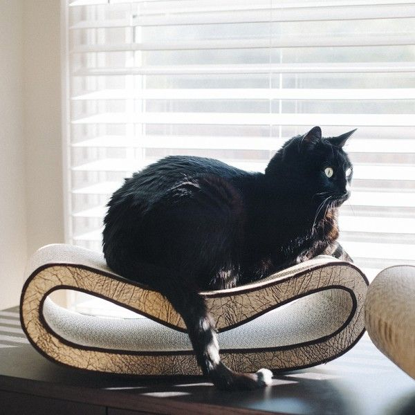 Charming Eco Friendly Pet Furniture For Your Furry Friends: 17 Best Images About Furry Friends