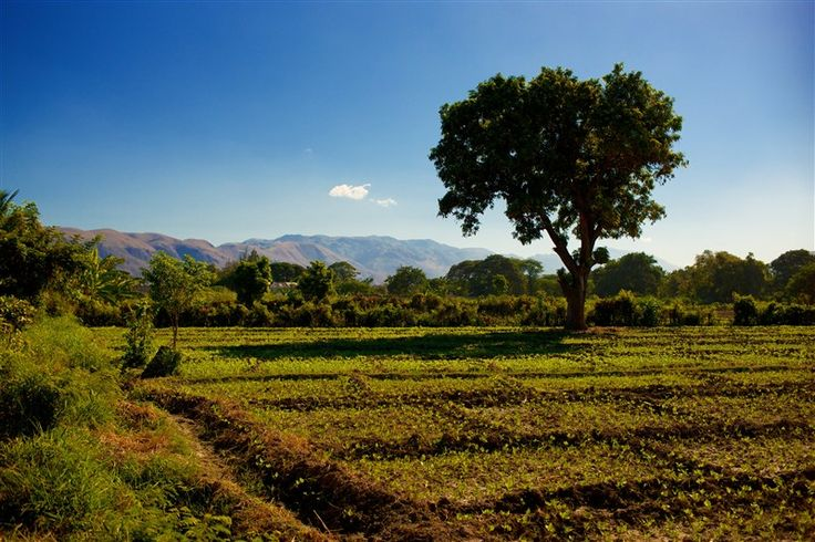 An innovative community agroforestry project is helping break the recurring cycle of poverty and environmental degradation in Haiti.