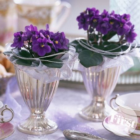 Sweet Centerpiece Duo | Violets, Home and We