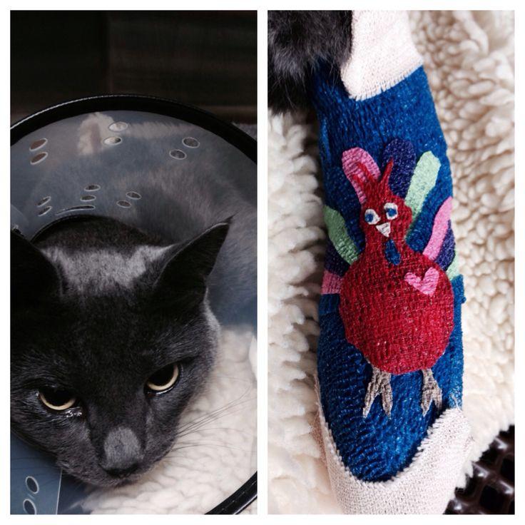 Vet wrap art! Veterinary Technician Pinterest Art