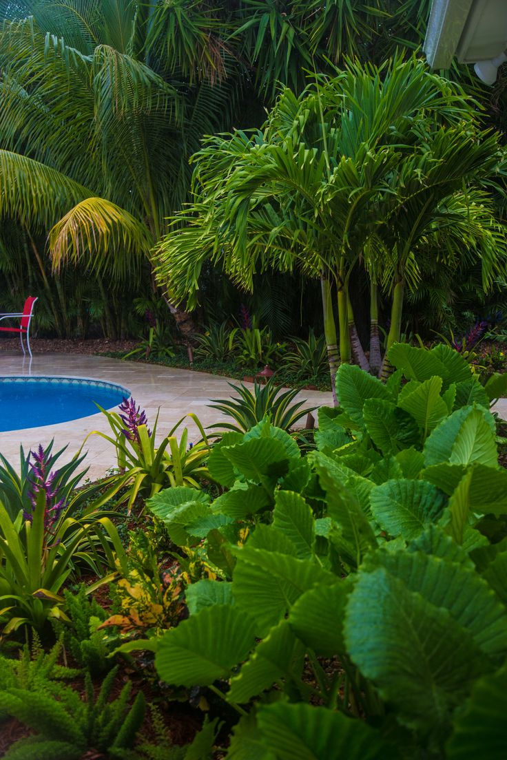 20 best plantings by jdla images on pinterest backyards south