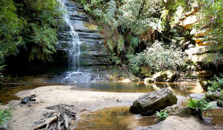 Lyrebird Dell walking track, Blue Mountains National Park. Photo: Steve Alton/NSW Government