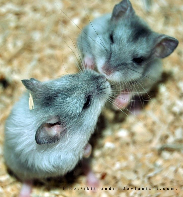 35 best My Compassion: Hamster images on Pinterest | Compassion ...