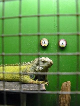 Cheap Ways to Build an Iguana Cage | eHow