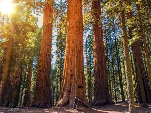 25+ best ideas about Sequoia california on Pinterest | California ...