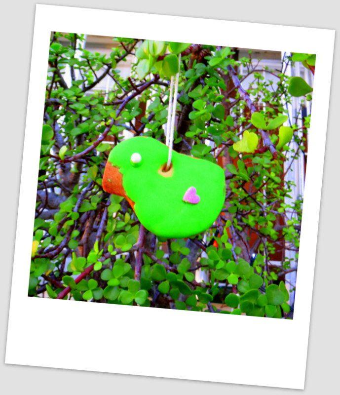 Green dird biscuit tree