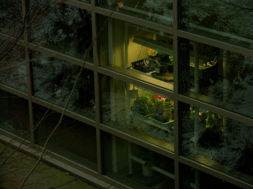 CLEVELAND BOTANICAL GARDEN, CLEVELAND, OH, USA  Nikon CoolPix 8700, No Flash, 38mm, F/3.9, 1/71 sec., ISO-200.    jpw