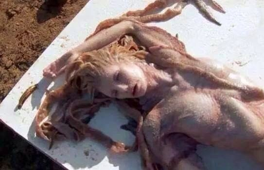 Sereia Real é encontrada morta na praia Real Mermaid