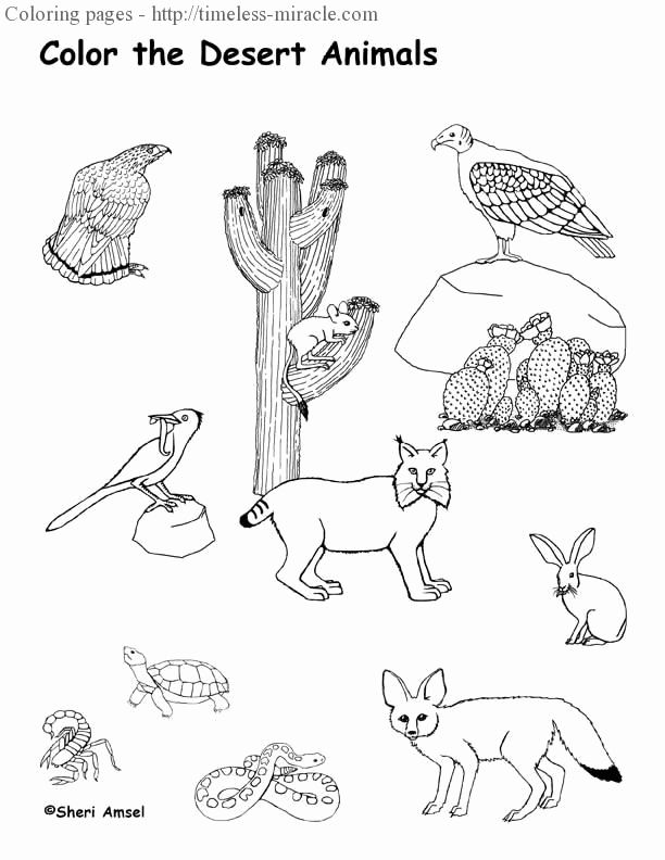 Animal Pictures For Coloring Lovely Desert Animals Coloring Pages Timeless Miracle In 2020 Desert Animals Coloring Desert Animals Desert Animals And Plants